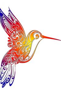 Colibris blanc